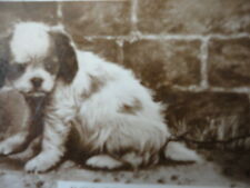 """Photo Cute Funny """" I'll Go and Eat worms """" Puppy  Vintage"""