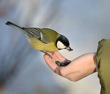 Bestes + preiswertes Vogelfutter + Futterspender auf Anfrage gibt´s hier!
