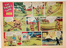 Tim Tyler's Luck by Young - large half-page color Sunday comic - Feb. 28, 1954
