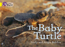 Collins Big Cat - The Baby Turtle: Band 3/Yellow: Band 03/Yellow, Belcher, Angie