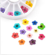 24 PCS Dried Flower New UV Gel Nail Art Acrylic Design Tips Decor DIY