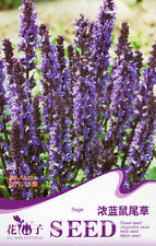 1 Pack 20 Dark Blue Sage Seeds Salvia Farinacea Salvia Japonica Flowers A225