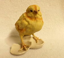Kaiser Yellow Hatchling Chick, Adorable