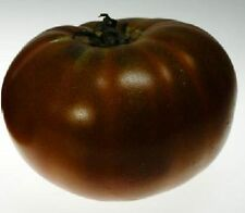 Paul Robeson Heirloom Tomato 20 Seeds Moon Gardens Simply Grown Beautifully