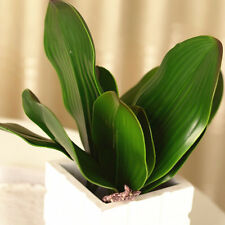 REAL TOUCH Butterfly Orchid Leaves x 4 - artificial plants