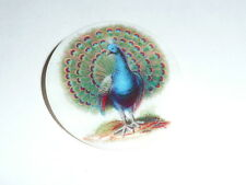 """Wonderful Peacock Bird on Mother of Pearl Button - MOP Button 1-3/8""""s"""