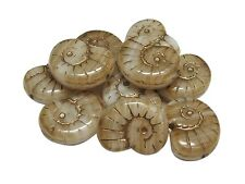 16x13mm Gold Inlayed Beige Sandstone Ammonite Snail Shell Beads (6) #5067