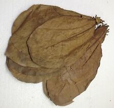 1 Kg PREMIUM INDIAN ALMOND CATAPPA LEAVES discus, shrimps ✈Free Shipping✈