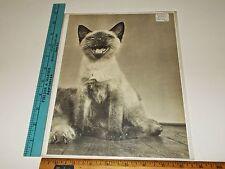Rare Original VTG Siamese Kitten / Cat Photogravure Art Print