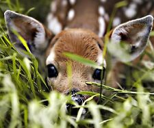 BABY DEER PEEK A BOO  FAWN MOUSE PAD  9 X 7