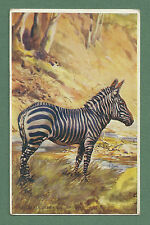 LOVELY 1931 POSTCARD MOUNTAIN ZEBRA - EDGAR H. FISHER