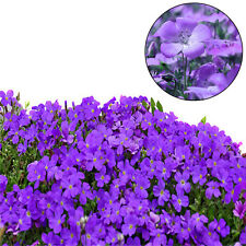 200pcs purple mustard seed home garden fence decor fantasy purple flower seeds