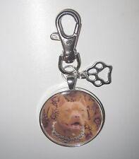 PITBULL Staffordshire Terrier Hund dog Schlüsselanhänger keychain-CC1XL - NEU!