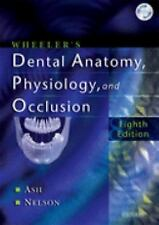 Wheeler's Dental Anatomy Physiology And Occlusion by Major M Ash