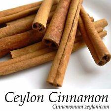 ~Ceylon CINNAMON Tree~ LIVE SPICE TREE Cinnamomum zeylanicum Med size Potd Plant
