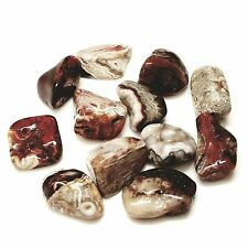 9-12 colorful Natural Crazy Lace Agate bulk tumbled Gem stone 1/4 lb Lot