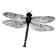 realistic Dragonfly UNMOUNTED insect rubber stamp #12