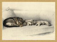 GERMAN SHEPHERD AND SLEEPING KEESHOND PUPS LOVELY DOG PRINT READY TO FRAME