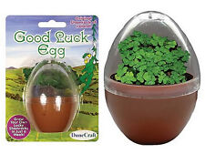 MICRO TERRARIUMS! GOOD LUCK EGG! GROW 4 LEAF CLOVERS! BY DUNECRAFT! FREE SHIP