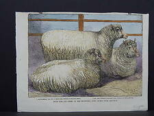 Illustrated London News Engraving 19th Century Hand Color S2#03 Prize Sheep