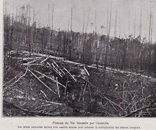 1928  --  PINERAIE DU VAR DEVASTEE PAR L INCENDIE   3B841