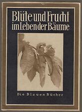 Lehrbuch der Biologieg Blüte und Frucht im Leben der Bäume Bartels Ausgabe 1930