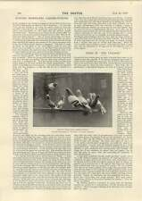 1898 Evening Newspaper Carrier Pigeons Cyrano The Successful