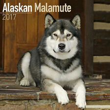 "Alaskan Malamute 2017 Wall Calendar by Avonside (12"" x 24"" when opened)"