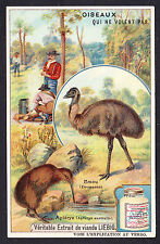 French Trade Card 7.1 X 11.1cm Flightless Bird Birds Emu Australian Kiwi Apteryx