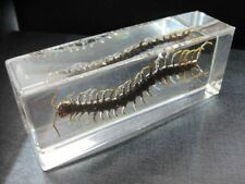 Chinese in Clear Acrylic Lucite Paperweight Insect Artificial Large Centipede