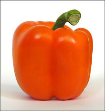 Sweet Bell Pepper Seeds - ORIOLE - Blocky Four Lobed Fruit - Canada - 20 Seeds