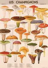 Mushrooms - Les Champignons Poster Cavallini & Co 20 x 28 Wrap
