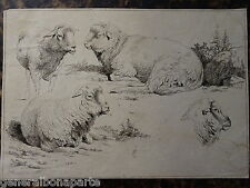 Charles ECHARD (1748-1810) GRAVURE ANIMAUX MOUTONS J.H ROOS ECOLE ROUEN 1800