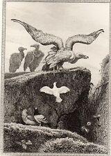 EAU FORTE / Fables de la Fontaine 1883 / LES VAUTOURS ET LES PIGEONS