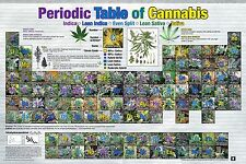 PERIODIC TABLE OF CANNABIS POSTER - 24x36 WEED POT MARIJUANA CHART LIST 241349