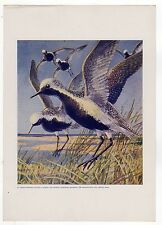 VINTAGE HUNTING FISHING PRINT Sportsman Magazine SEA GULL Gulls OCEAN Beach