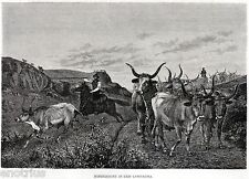 ROMA: Buoi e Bovari della Campagna Romana.BUTTERI.Agro Romano.Stampa Antica.1876