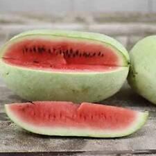 Iraqi Heirloom Watermelon - *Ali Baba* - 4 seeds