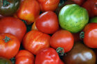 TOMATO Heirloom Mix 100+ seeds MIXED VARIETIES heritage vegetable garden NON GMO