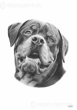ROTTWEILER Rotty Rottie pencil drawing art print RARE