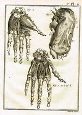 Diderot's Enclyclopedie - ANATOMIE, HANDS & FEET - Copper Engraving - c1750