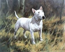 BULL TERRIER ALL WHITE ENGLISH DOG ART LIMITED EDITION PRINT - by John Trickett