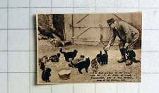 1938 Mr Fp Pitts Of Comb Stowmarket Feeding Some Of His 13 Cats