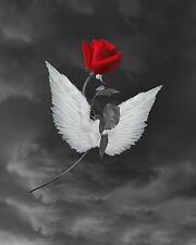 Black White Red Rose Flower Angel Wings Home Decor Wall Art Matted Picture