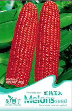 1 Pack 10 Red Waxy Corn Seeds Delicious Green Food Garden Vegetable Fruit B044