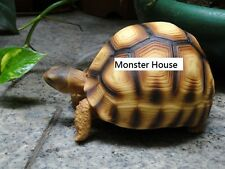 Life Size Large Angonoka Tortoise Turtle Resin Replica Model 16cm
