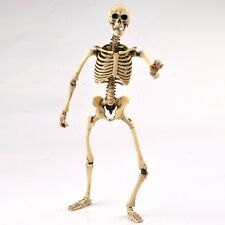 1:6 Scale Skeleton Body Movable Action Figure Model Toy