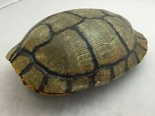 Real Turtle Shell - Red Eared Slider 7-8 inch #2