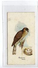 (Jc5281-100)  LAMBERT & BUTLER,BIRDS & EGGS,SPARROW HAWK,1906,#34