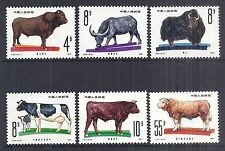 1981 PRC China SC 1679-1684 T63 Complete Set of 6, Cattle Breeds - MNH*